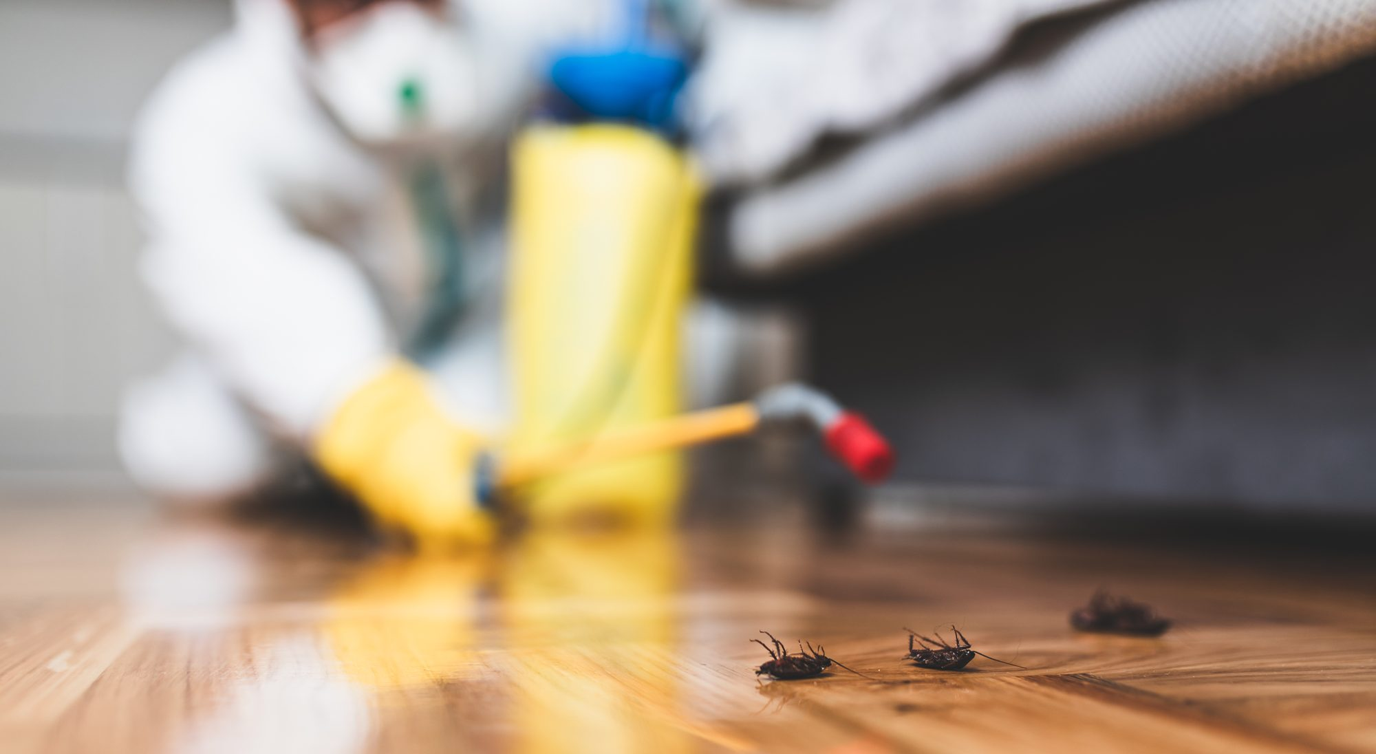 Pest Control in Vancouver, WA